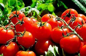 Kalz farms Tomato